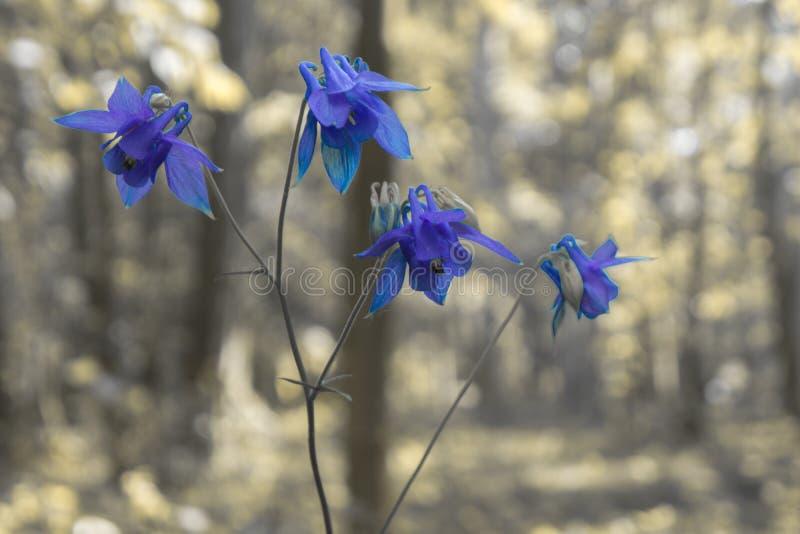 Een mooie bloem in het hout royalty-vrije stock fotografie
