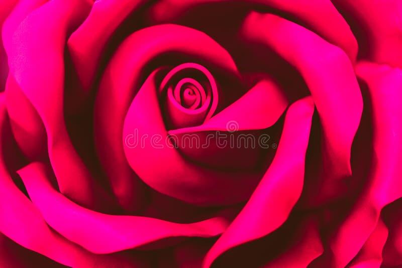 Een mooie bloem van roze plastiek Samenvatting Vage Achtergrond Selectieve nadruk royalty-vrije stock foto's