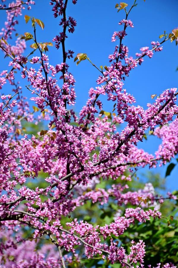 Een mooie boom kwam in de tuin, de lente tot bloei royalty-vrije stock foto