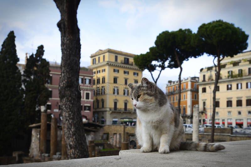Een mooie droevige kat die zijn eigen grondgebied meespelen royalty-vrije stock foto