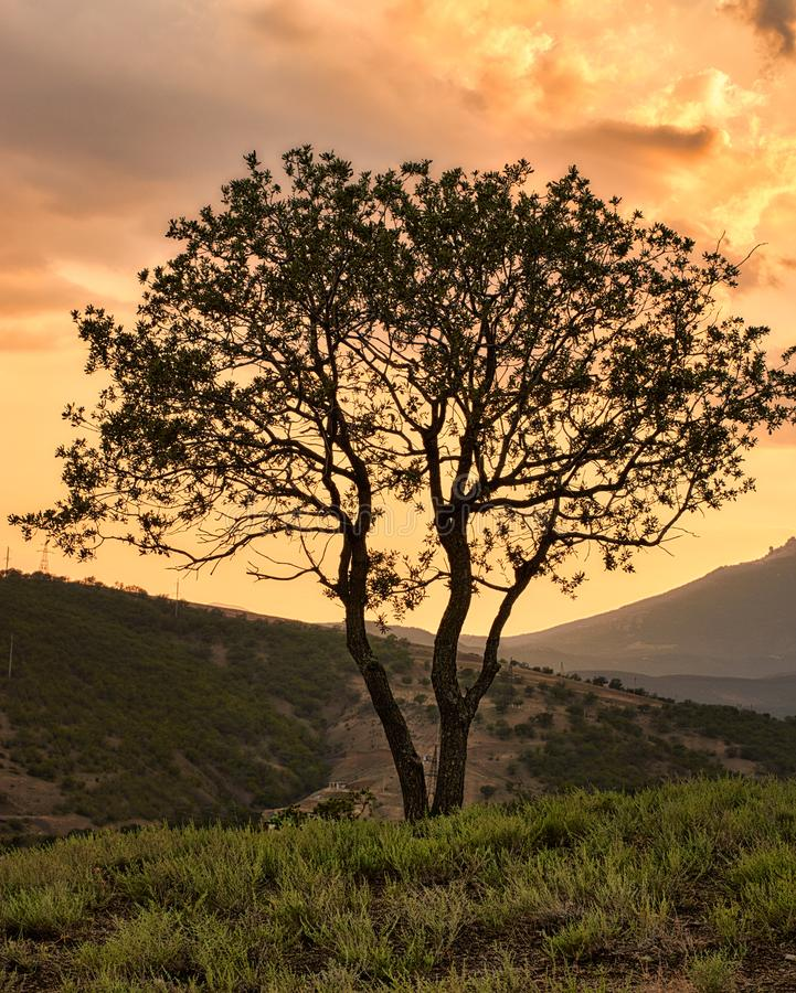 Een mooie droge boom herhaalt de vorm van de bergen Krim bergen Mooie rode zonsondergang royalty-vrije stock foto's