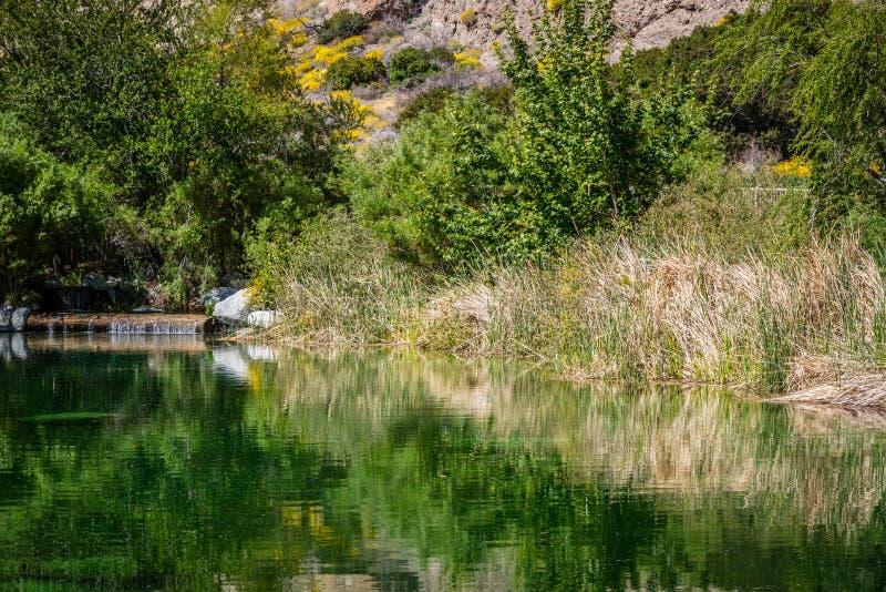 Een mooie duidelijke oase van de waterwoestijn in het midden van Whitewater-Domein in Californië stock afbeeldingen