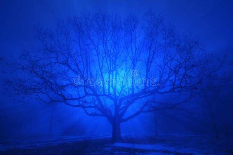 Een mooie eiken boom in blauwe avondmist royalty-vrije stock afbeelding