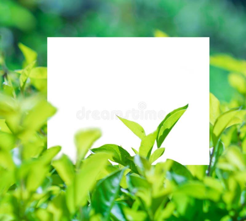 Een mooie exemplaar ruimtedierechthoek door installaties in een landschap wordt ontworpen vector illustratie