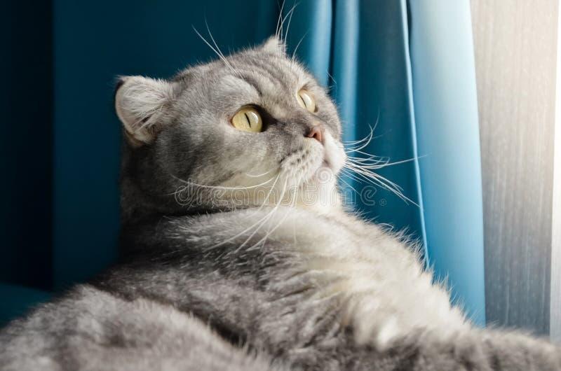 Een mooie, fluffy tabby kat ligt op een bed in een heldere kamer vlakbij het raam van het huis Afsluiten portret van een schattig royalty-vrije stock foto's