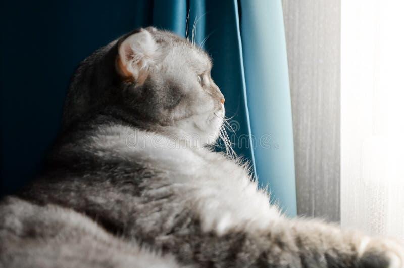 Een mooie, fluffy tabby kat ligt op een bed in een heldere kamer vlakbij het raam van het huis Afsluiten portret van een schattig stock afbeelding