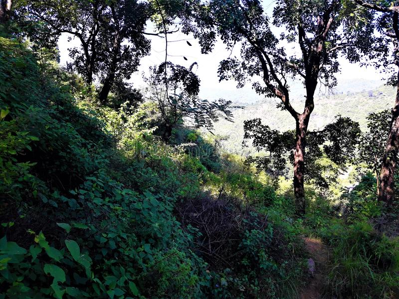 Een Mooie groene Aard met Installaties & Bomen royalty-vrije stock fotografie