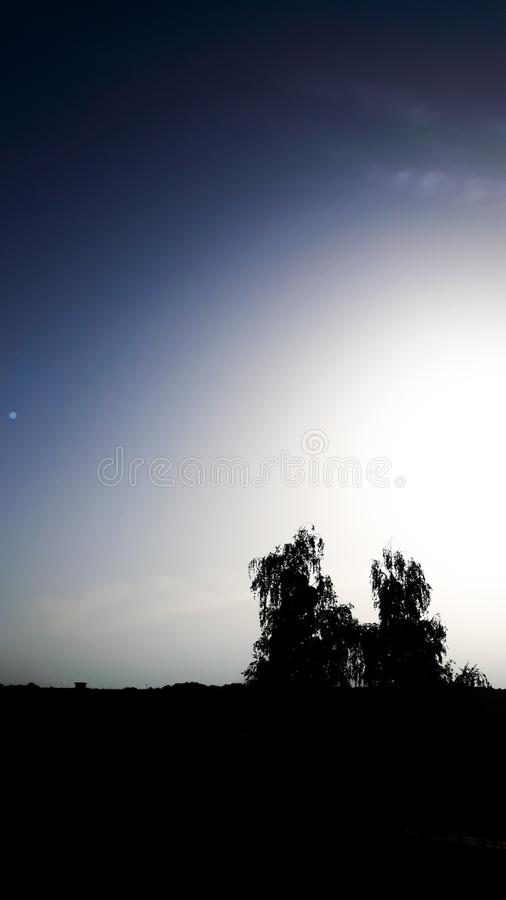 Een mooie hemel en twee bomen stock afbeeldingen
