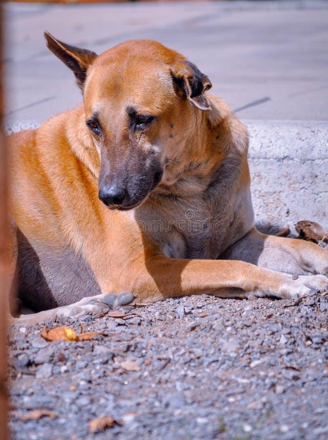 Een mooie hond bepaalt alleen dichtbij het voetpad royalty-vrije stock fotografie