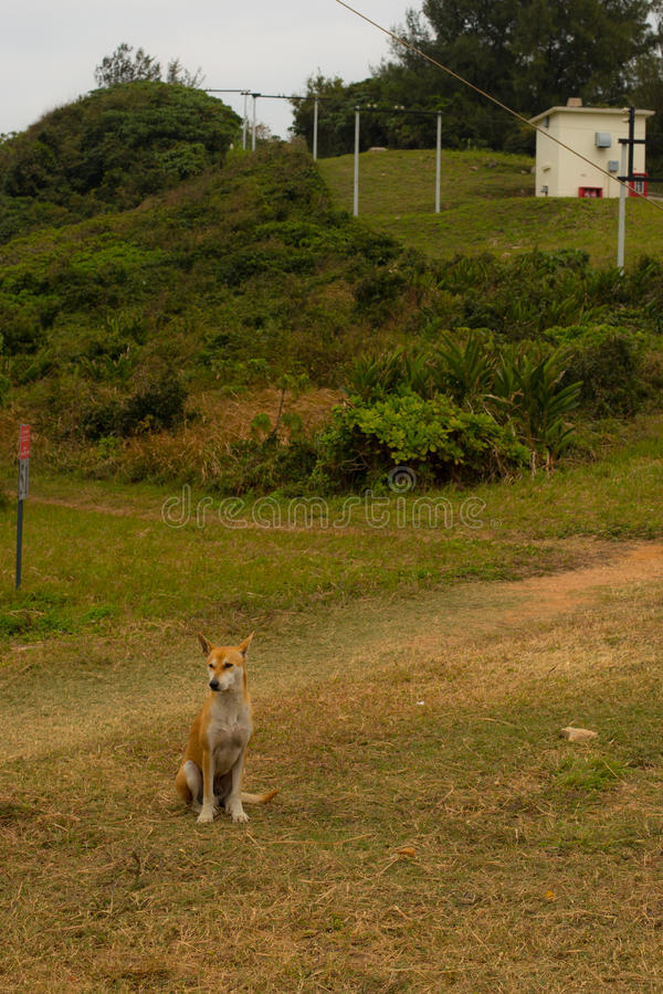 Een mooie hond in Kaap D ` Aguilar in Hong Kong stock foto
