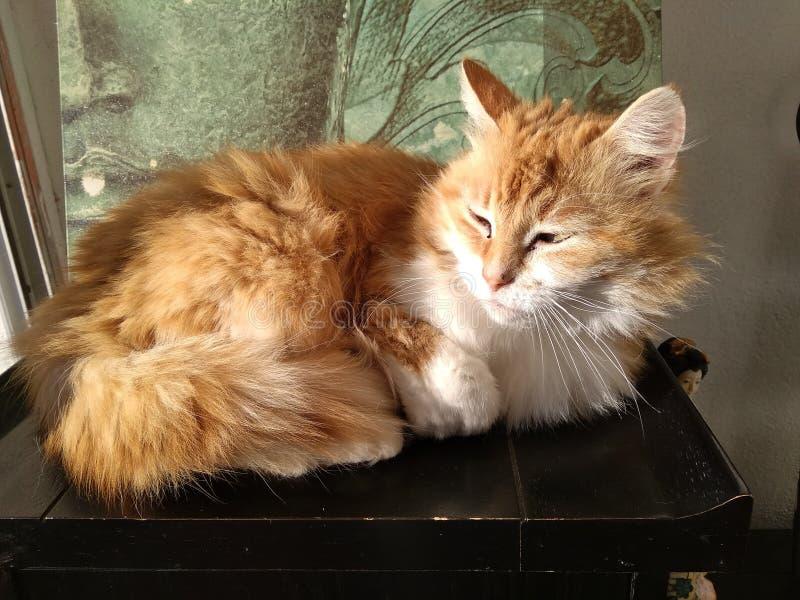 Een mooie kat met licht en schaduw royalty-vrije stock afbeelding