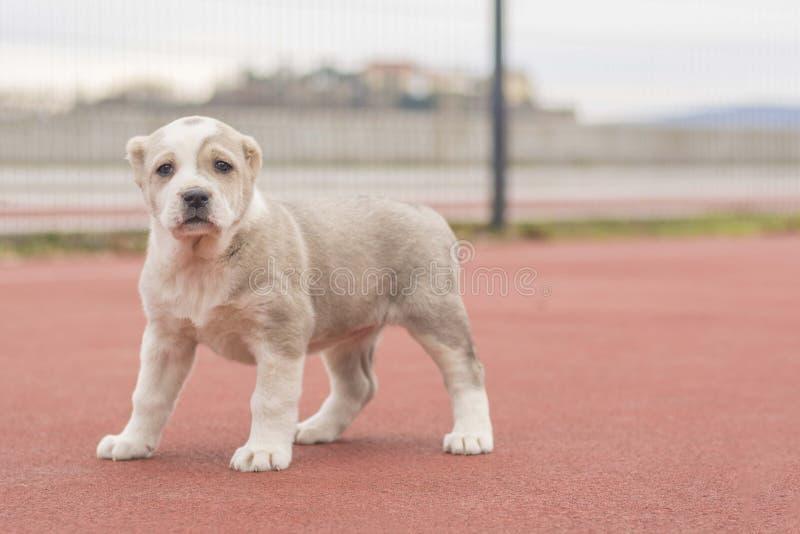 Een mooie kleine hond stelt buiten stock foto's