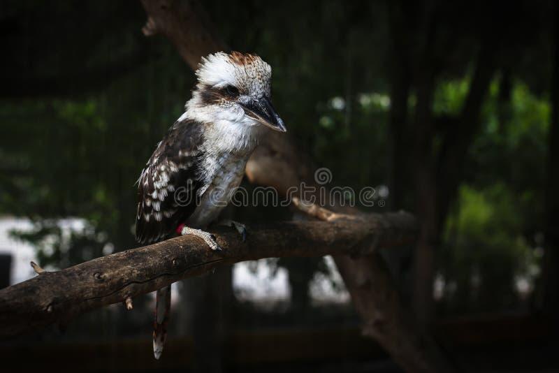 Een mooie kleine vogel in de dierentuin royalty-vrije stock afbeelding
