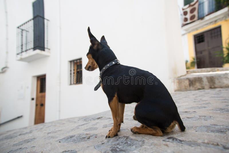 Een mooie leuke eigengemaakte hond stock afbeelding