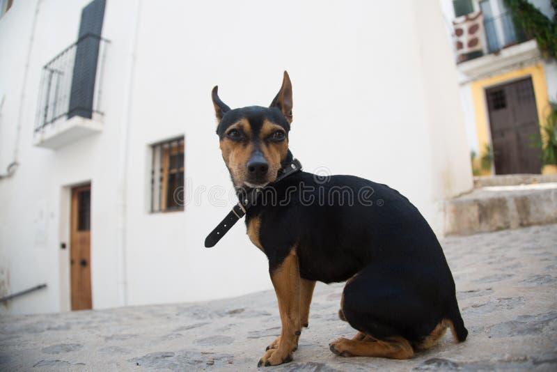 Een mooie leuke eigengemaakte hond zit op de straat royalty-vrije stock afbeelding