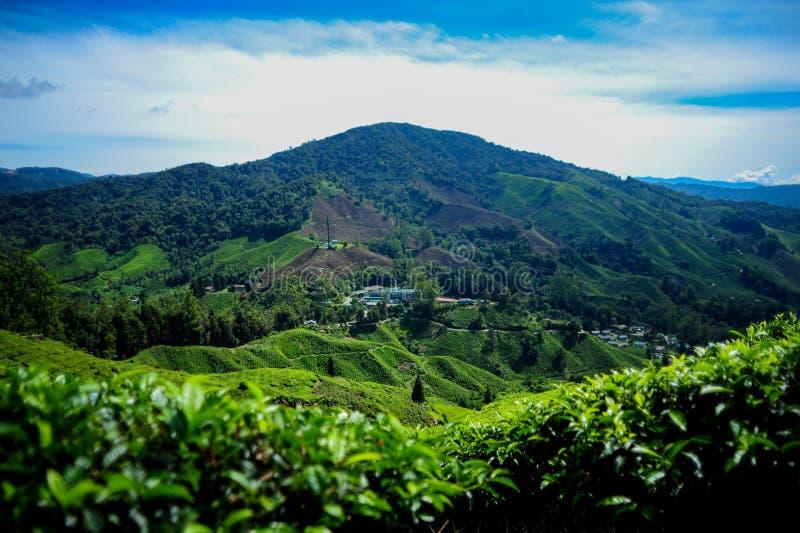 Een mooie mening bij de theeaanplanting in Cameron Highland stock foto