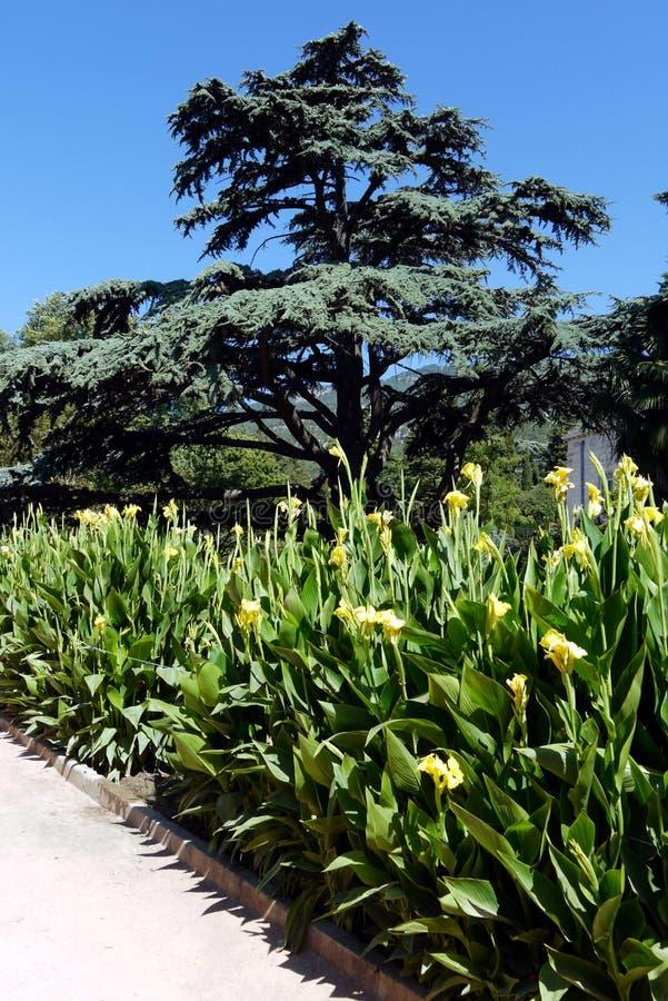 Een mooie mening in het park op een hete de zomerdag op een bed van hoge stammen van gele bloemen met het grote brede bladeren gr stock foto's