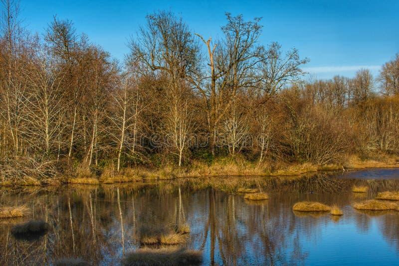 Een mooie mening van een landschap met water en bomen daling het plaatsen royalty-vrije stock fotografie