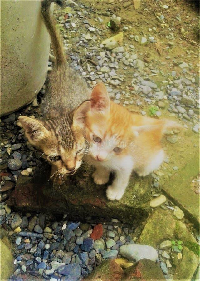 Een Mooie Onschuldige zusterkatten die aan u letten op stock afbeeldingen