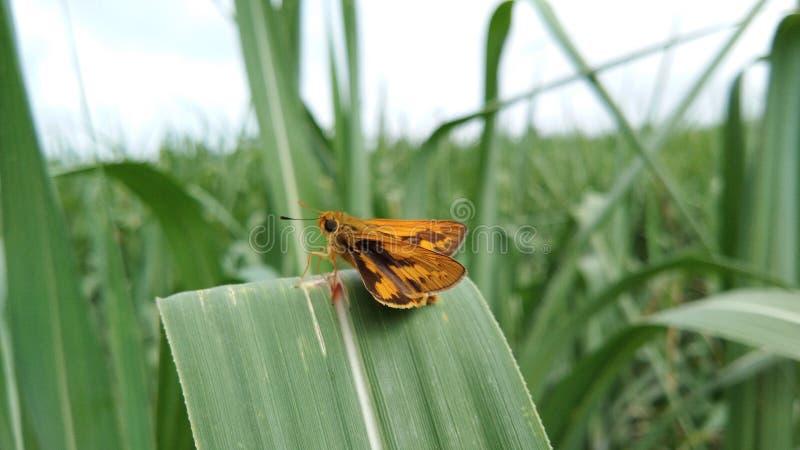 Een mooie positie van insectmot op groene gekleurde bladeren royalty-vrije stock foto