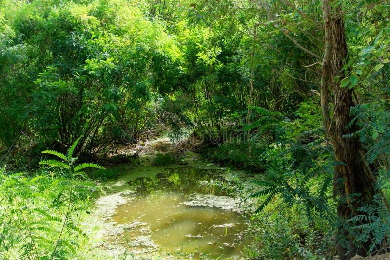 Een mooie stroom vloeit door een dik, overwoekerd bos stock foto's
