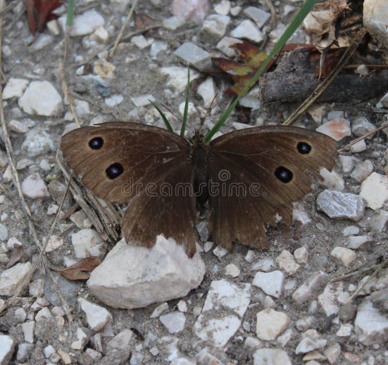 Een mooie vlinder stock foto's