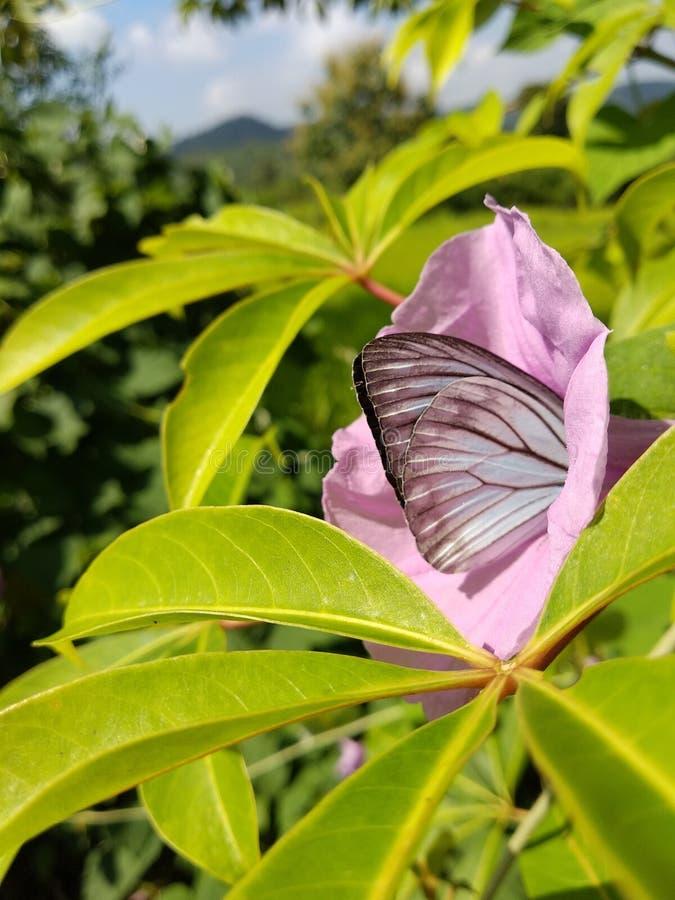 Een mooie vlinder royalty-vrije stock afbeelding