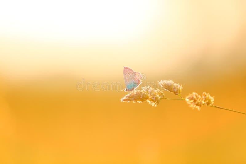 Een mooie vlinder die op een bloem rust Overvloed van exemplaarruimte stock fotografie