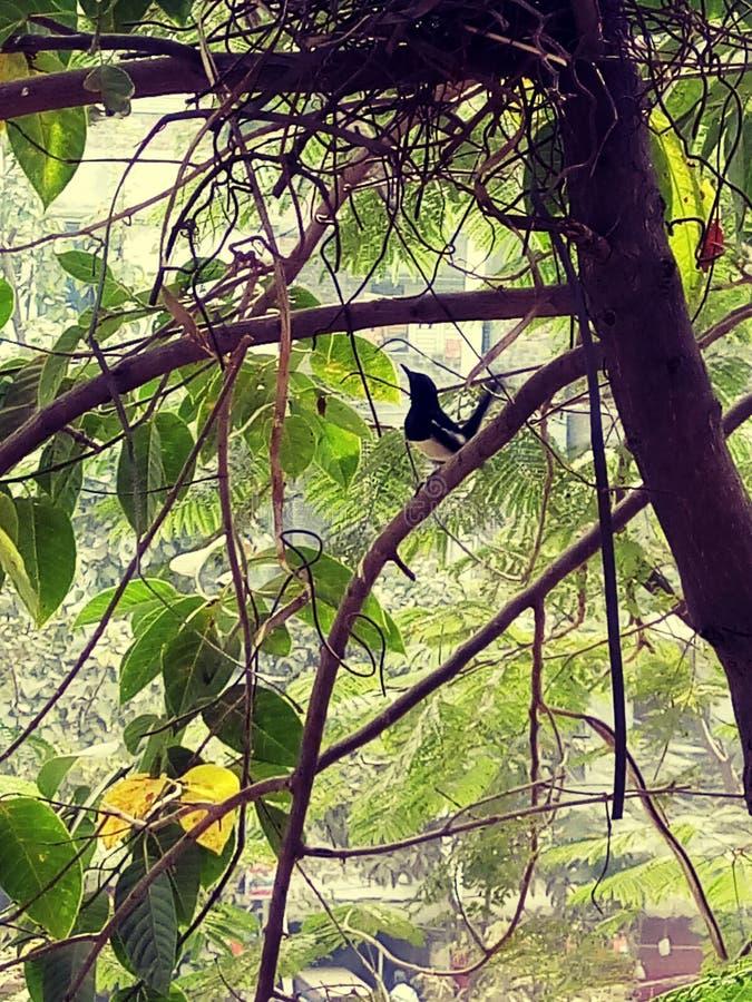 Een mooie vogel is op de boom stock afbeeldingen