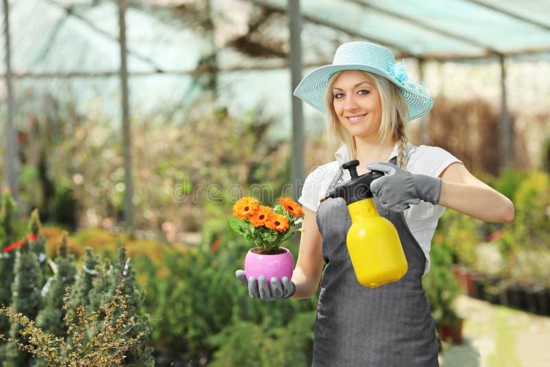 Een mooie vrouwelijke tuinman die een installatie water geeft stock foto