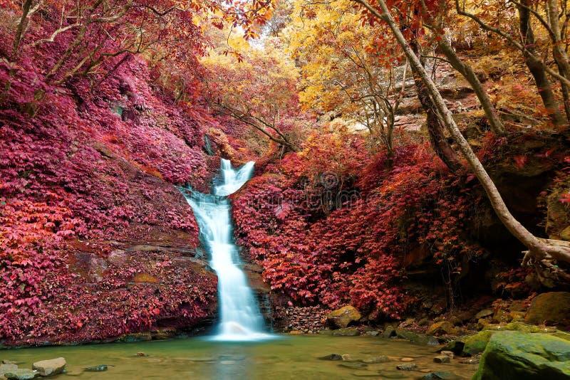Een mooie zijdeachtige waterval die onderaan de bemoste rotsen in een vijver in een geheim ravijn tuimelen stock foto's