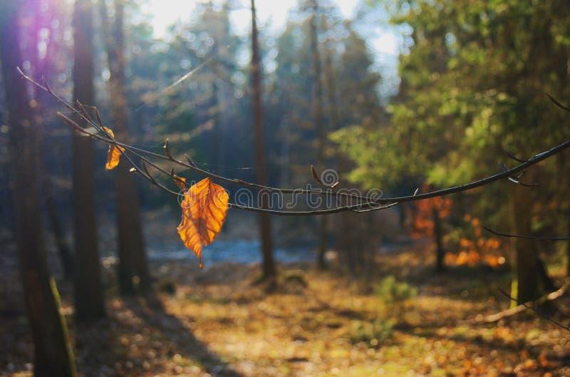Een mooie zonnige dag in het bos royalty-vrije stock foto