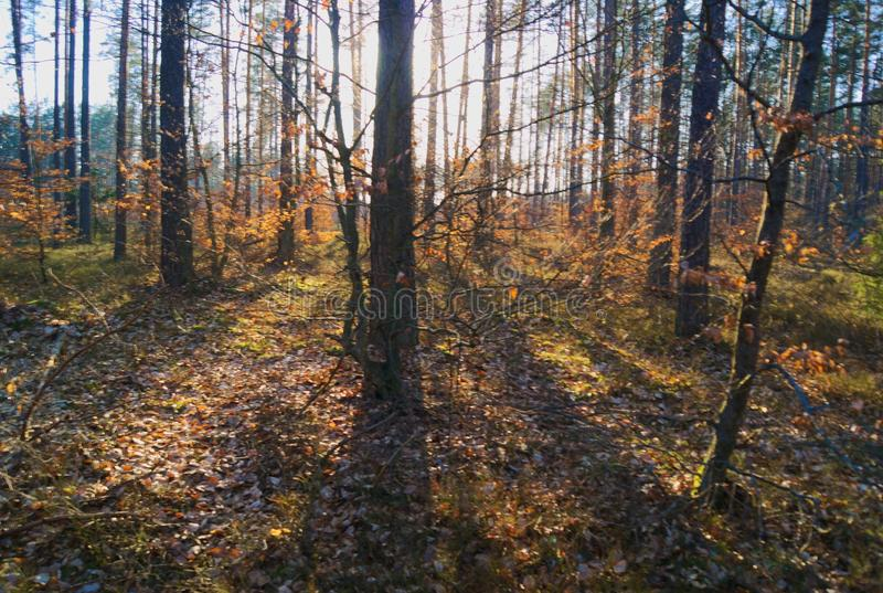 Een mooie zonnige dag in het bos stock afbeeldingen