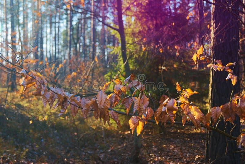Een mooie zonnige dag in het bos stock foto's