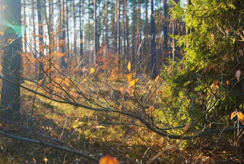 Een mooie zonnige dag in het bos royalty-vrije stock afbeelding