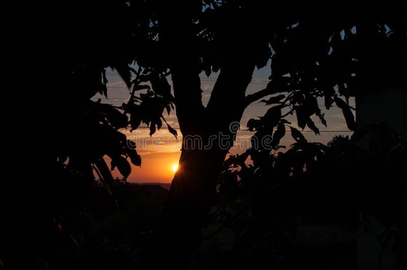 Een mooie zonsondergang achter het boomsilhouet stock foto's