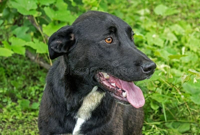 Een mooie zwarte hond, die ergens in een dorp in Europa wordt verlaten stock afbeeldingen