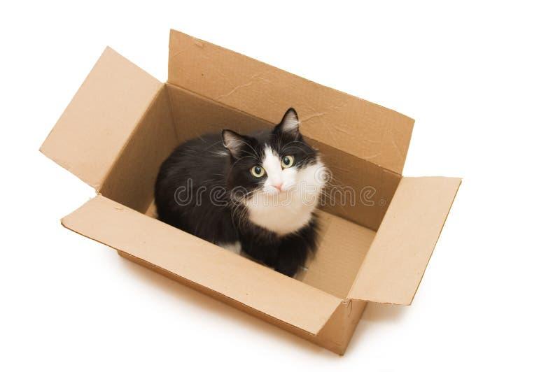 Een mooie zwarte kat in de kartondoos stock foto's