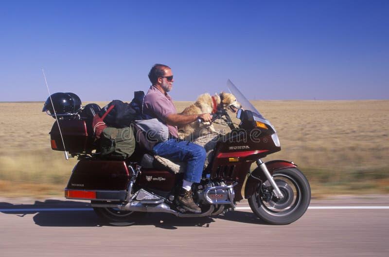Een motorrijder met zijn hond die op de Weg Tusen staten in Zuid-Dakota kruisen royalty-vrije stock foto's