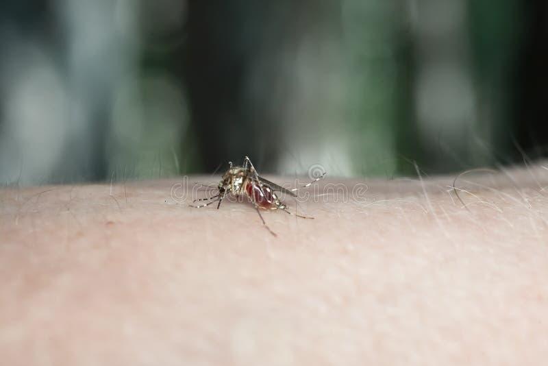 Een mug het drinken bloed stock fotografie
