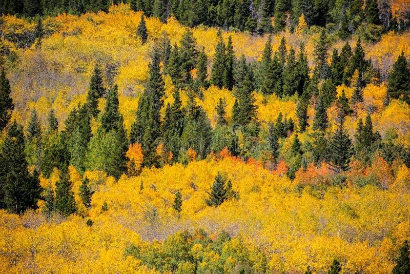 Een multicolored luifel van dalingsgebladerte in Colorado royalty-vrije stock foto's