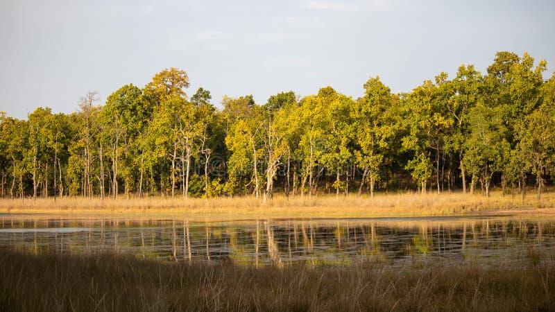 Een natuurlijke toneellandschapsmening van bomen in bos royalty-vrije stock foto's