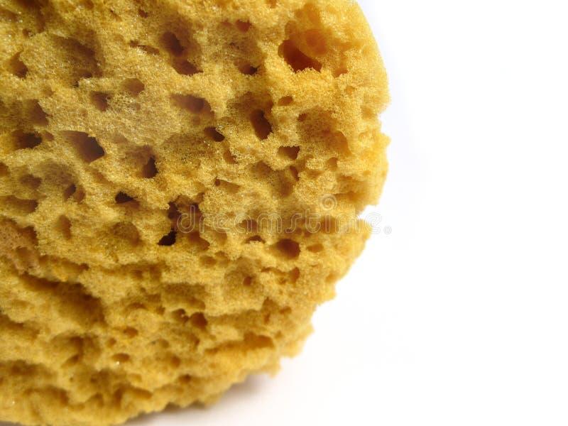 Een natuurlijke wilde spons stock foto