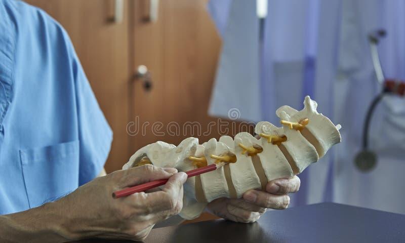 Een neurochirurg die op lumbaal ruggewervelmodel weg richten in medisch stock afbeeldingen
