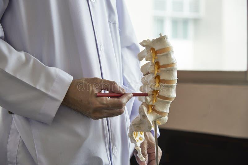Een neurochirurg die op lumbaal ruggewervelmodel weg richten in medisch stock foto