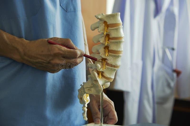 Een neurochirurg die op lumbaal ruggewervelmodel weg richten in medisch royalty-vrije stock afbeeldingen