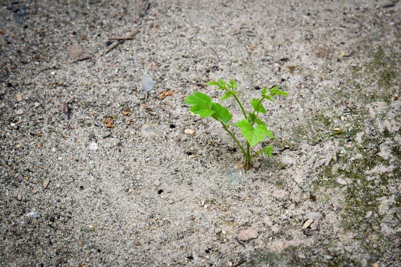 Een nieuwe beginjonge plant groeit in een droge grond royalty-vrije stock foto