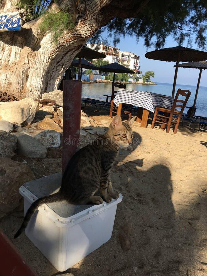Een nieuwsgierige blik op de kat op de kust royalty-vrije stock afbeelding