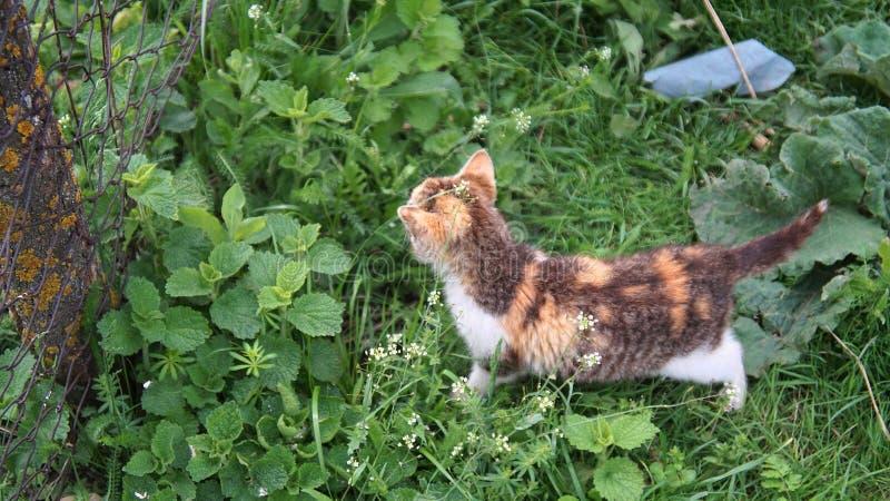 een nieuwsgierige kleine kleurrijke kat royalty-vrije stock afbeeldingen