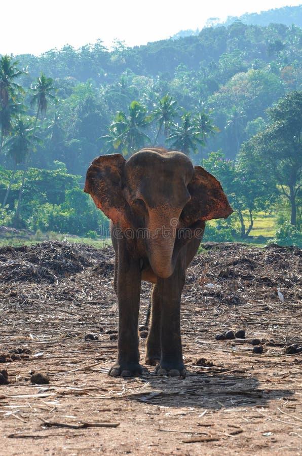 Een olifant stock afbeeldingen